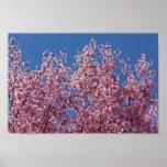 En la teja japonesa azul de las flores de cerezo