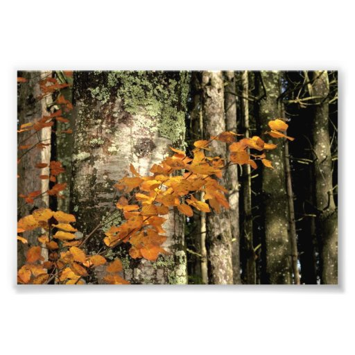 En las maderas fotografías