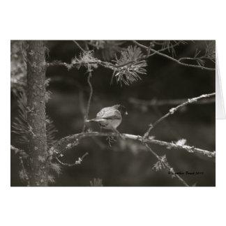 ¡En las maderas! Tarjeta De Felicitación
