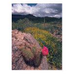 En las rocas tarjetas postales