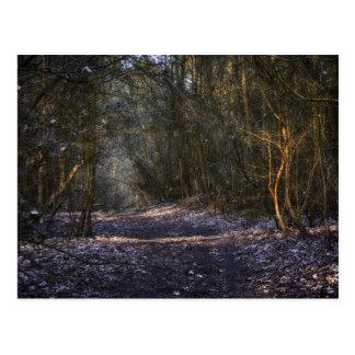 En las sombras postal