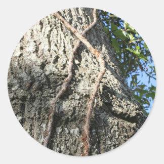 En los árboles etiquetas redondas