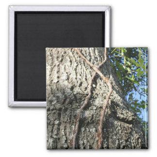 En los árboles imán cuadrado