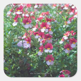 En los colores raros criados violetas de cuernos a pegatina