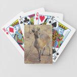 En los naipes del parque zoológico cartas de juego