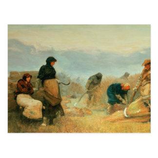 En los pantanos, 1878 postales