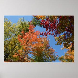 En los tops del árbol impresiones