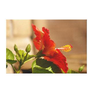 En mi jardín, flor roja del hibisco impresión en lona estirada