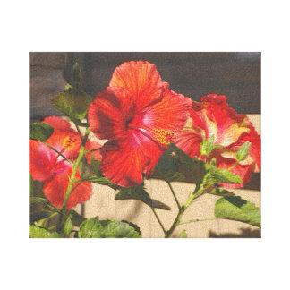 En mi jardín, hibisco anaranjado rojo grabado en r impresiones en lona estiradas