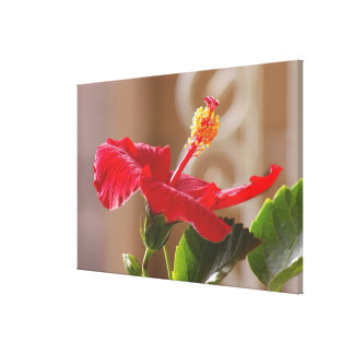 En mi jardín, hibisco rojo grabado en relieve con  lona envuelta para galerias