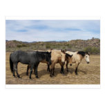 En mi paseo con Ronda vimos estos caballos Tarjeta Postal