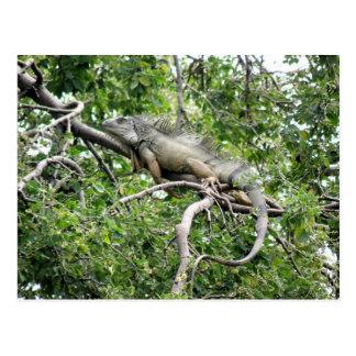 En Monagas de la iguana Tarjetas Postales