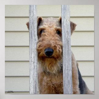 """En poster de la caseta de perro"""