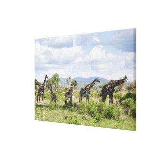En safari en el parque nacional de Mikumi en Tanza Impresión En Lienzo Estirada