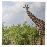 En safari en Tanzania, África. 2 Azulejo Cuadrado Grande