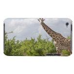 En safari en Tanzania, África. 2 Case-Mate iPod Touch Fundas