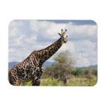 En safari en Tanzania, África Iman Rectangular