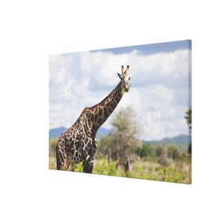 En safari en Tanzania, África Impresión De Lienzo
