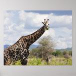 En safari en Tanzania, África Posters
