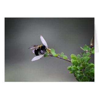 En segundo lugar en la serie de la abeja tarjeta de felicitación