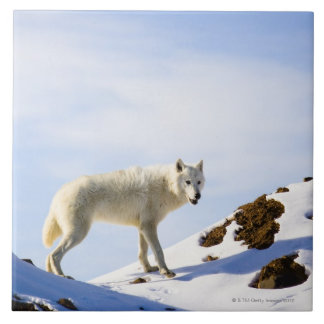 en terreno nevado azulejo cuadrado grande