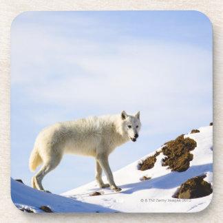 en terreno nevado posavaso