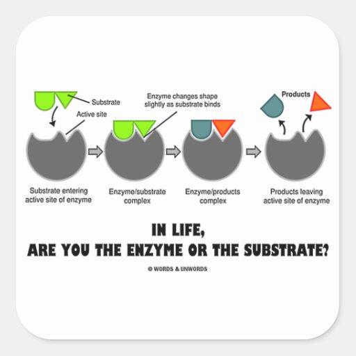 ¿En vida está usted la enzima o el substrato? Humo Calcomanía Cuadradase