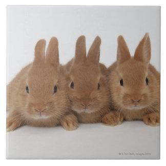 Enanos de Rabbits.Netherland Azulejo Cuadrado Grande