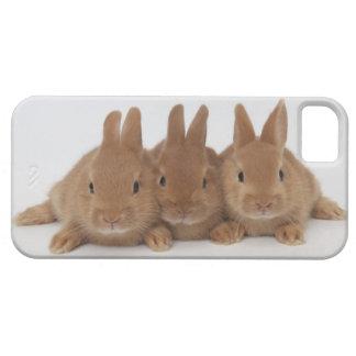 Enanos de Rabbits.Netherland iPhone 5 Funda