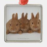 Enanos de Rabbits.Netherland Ornamentos De Reyes