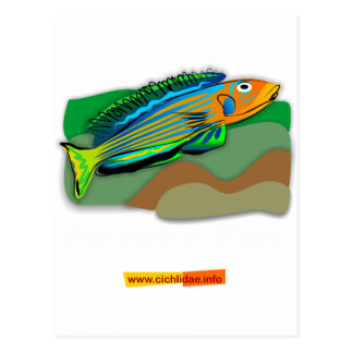 Enantiopus kilesa postcard