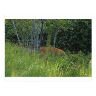 Enarbolar ciervos postal