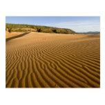 Enarene las ondulaciones y las dunas en la arena r tarjetas postales