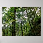 Encantamiento del bosque impresiones