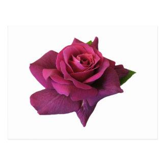 Encanto color de rosa del ~ postal