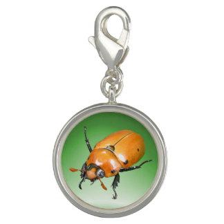 Encanto del ~ del escarabajo de la vid dije con foto