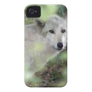 Encanto del lobo iPhone 4 protectores