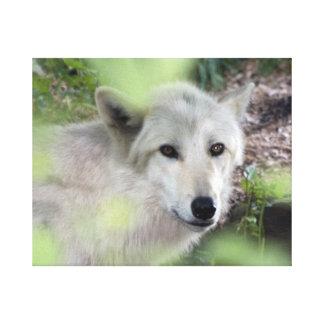 Encanto del lobo impresiones en lienzo estiradas