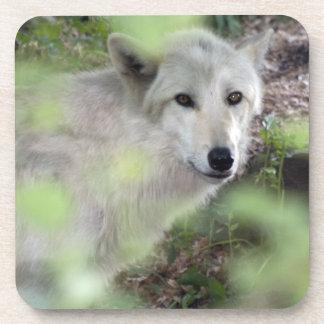 Encanto del lobo posavaso
