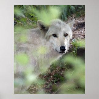 Encanto del lobo póster