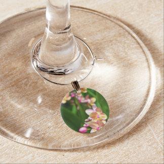 Encanto del vino del Orchidaceae Identificadores De Copas