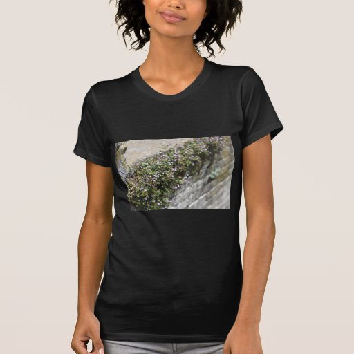 Encanto y romance del Viejo Mundo Camiseta