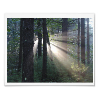 enchanted forest photo print