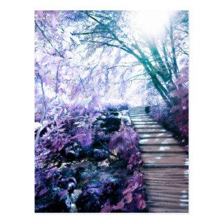 enchanted path postcard