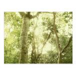 Enchanted Wood Postcard