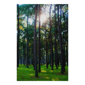Enchanting Forest Poster