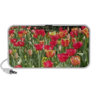 Enchanting Tulips Doodle Speaker