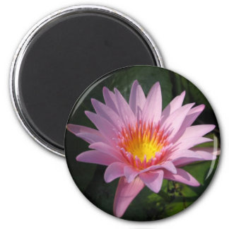 Enchantment 2 Inch Round Magnet