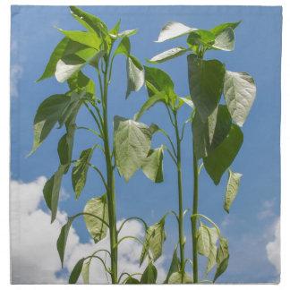 Enchufe de la planta de la pimienta servilleta de papel