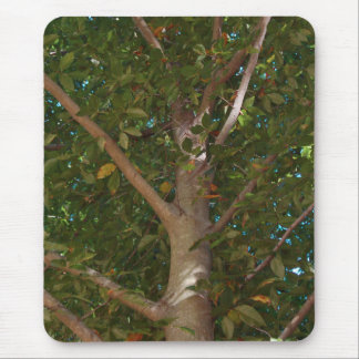 Encima adentro de un árbol tapete de raton